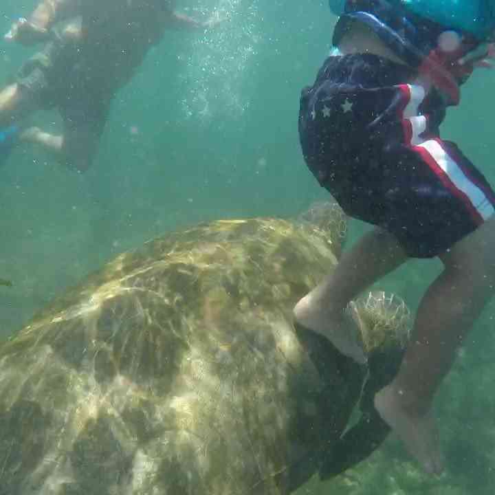 Snorkeling with toddlers and kids. Incredible experience in the Galapagos snorkeling with our toddler son.