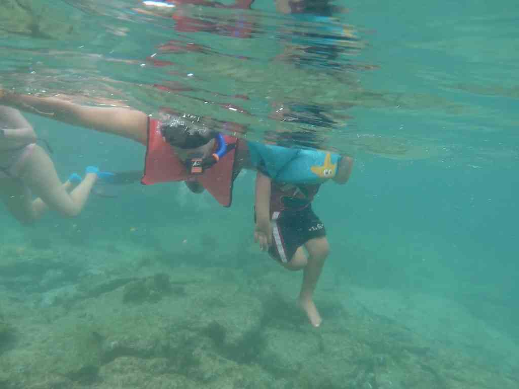 Snorkeling with toddlers. Snorkeling with kids. Image of us snorkeling in the Galapagos.