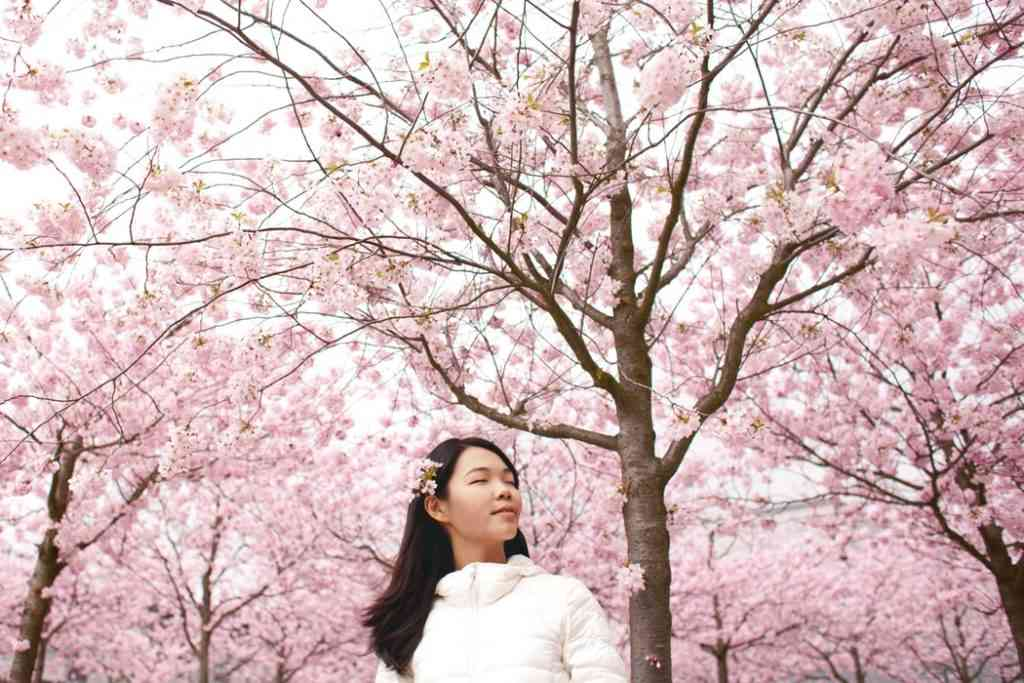 lady standing beneath Japanese cherry blossoms in Japan
