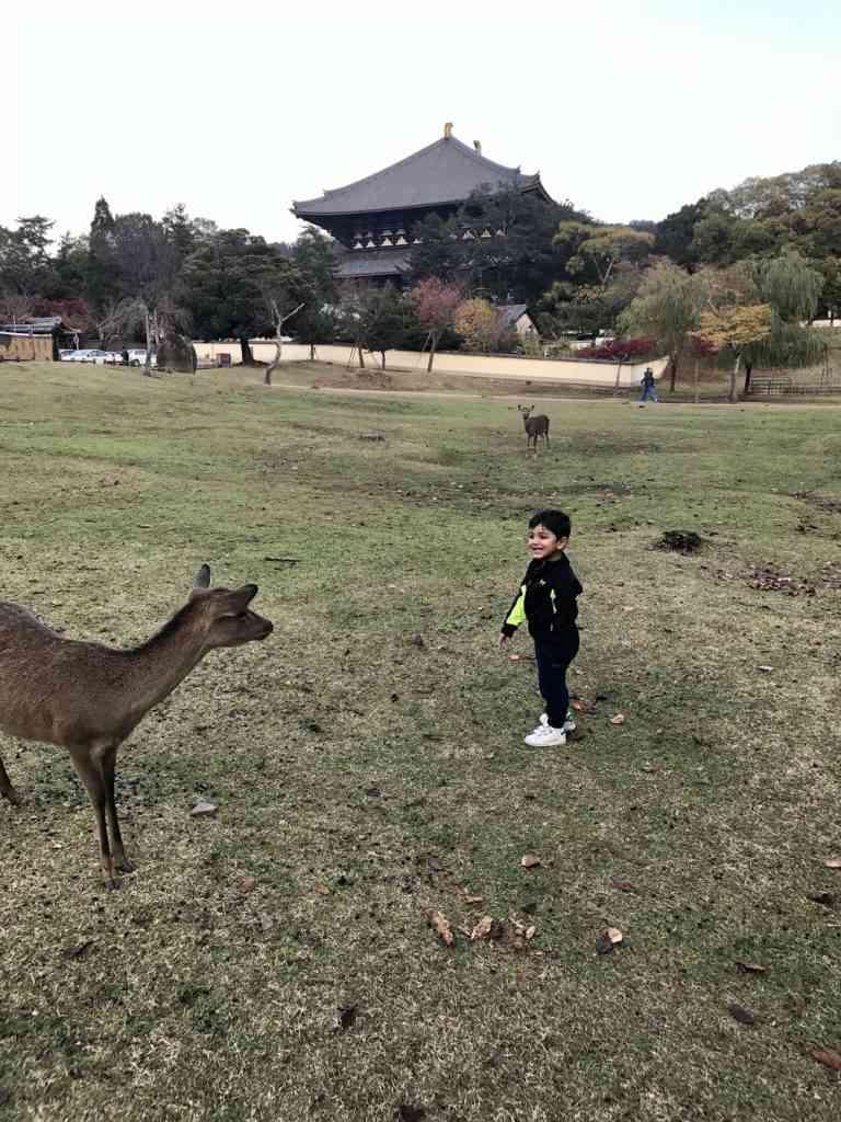 Aarav interacting with a deer in Nara