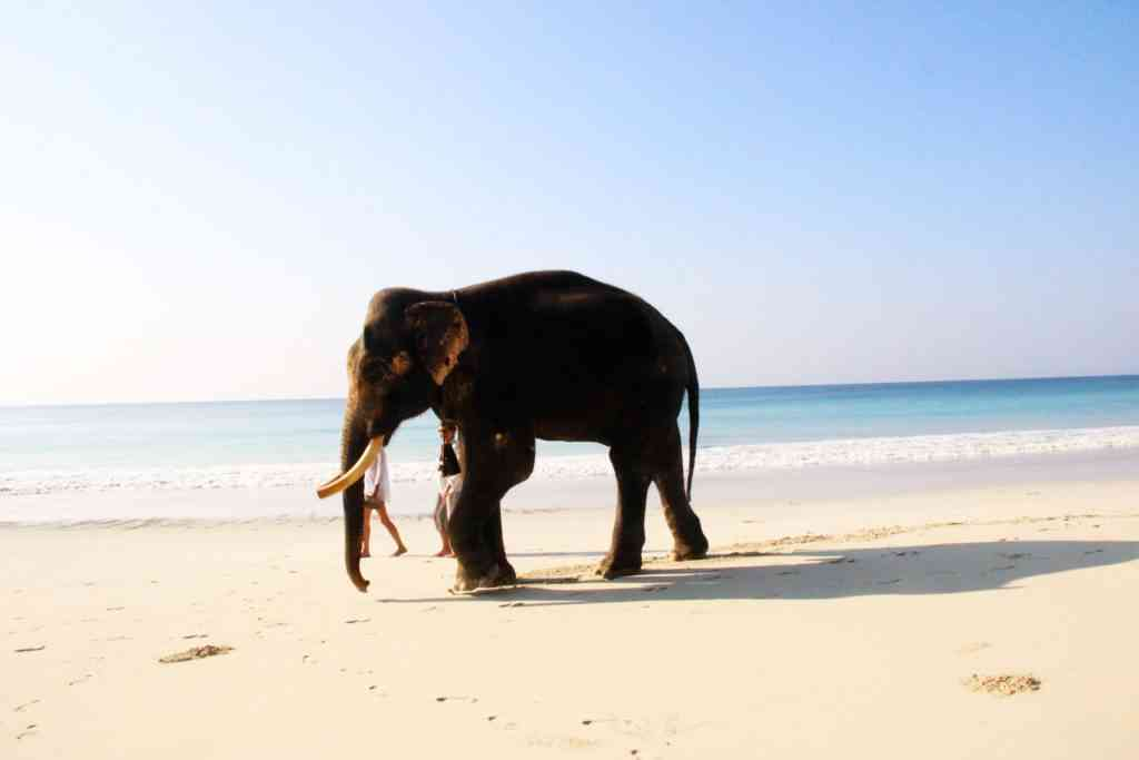 Places to visit to India with kids - Havelock Island