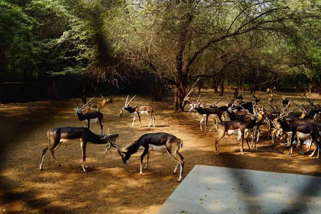 Kids at the Delhi Deer Park
